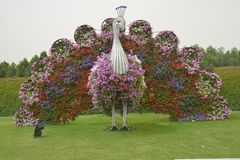 Κήπος θαύματος στο Ντουμπάι Στοκ Φωτογραφίες