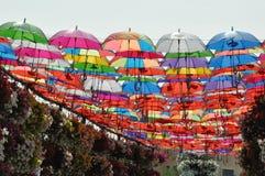 Κήπος θαύματος του Ντουμπάι στα Ε.Α.Ε. Στοκ Φωτογραφίες