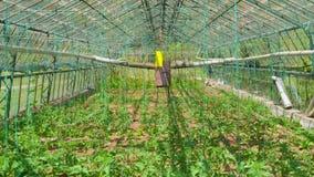 Κήπος θερμοκηπίων, εσωτερικός απόθεμα βίντεο