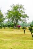 Κήπος διακοσμήσεων δέντρων μπονσάι της Ebony Στοκ εικόνα με δικαίωμα ελεύθερης χρήσης