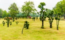 Κήπος διακοσμήσεων δέντρων μπονσάι της Ebony Στοκ Εικόνα