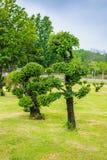 Κήπος διακοσμήσεων δέντρων μπονσάι της Ebony Στοκ Εικόνες