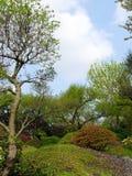 κήπος ιαπωνικά στοκ φωτογραφίες