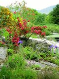 κήπος ιρλανδικά Στοκ Εικόνες