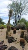 Κήπος κάκτων ερήμων Στοκ εικόνες με δικαίωμα ελεύθερης χρήσης