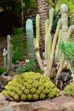 Κήπος κάκτων Στοκ φωτογραφία με δικαίωμα ελεύθερης χρήσης