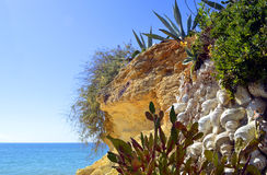 Κήπος κάκτων Armacao de Pera Beach Στοκ φωτογραφία με δικαίωμα ελεύθερης χρήσης