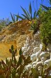 Κήπος κάκτων Armacao de Pera Beach Στοκ φωτογραφίες με δικαίωμα ελεύθερης χρήσης