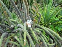 Κήπος κάκτων, Guanacaste Κόστα Ρίκα Στοκ φωτογραφίες με δικαίωμα ελεύθερης χρήσης