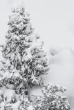 Κήπος κάτω από το χιόνι το χειμώνα Στοκ φωτογραφία με δικαίωμα ελεύθερης χρήσης