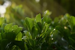 Κήπος και πράσινα λουλούδια στον κήπο στοκ εικόνες με δικαίωμα ελεύθερης χρήσης