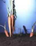 κήπος καρότων Στοκ φωτογραφία με δικαίωμα ελεύθερης χρήσης