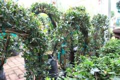 κήπος καλός Στοκ φωτογραφία με δικαίωμα ελεύθερης χρήσης