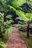 Κήπος κοντά στον καταρράκτη Siriphum Στοκ φωτογραφίες με δικαίωμα ελεύθερης χρήσης