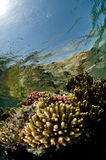 κήπος κοραλλιών Στοκ εικόνες με δικαίωμα ελεύθερης χρήσης
