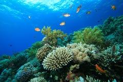 κήπος κοραλλιών Στοκ Εικόνα