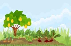 Κήπος κουζινών ή φυτικός κήπος με τα διαφορετικά λαχανικά και το οπωρωφόρο δέντρο απεικόνιση αποθεμάτων