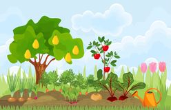 Κήπος κουζινών ή φυτικός κήπος με τα διαφορετικές λαχανικά, τα οπωρωφόρα δέντρα και τις τουλίπες ελεύθερη απεικόνιση δικαιώματος