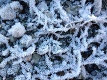 Κήπος 02 κρυστάλλου πάγου Στοκ Εικόνα