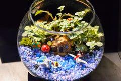 Κήπος κύπελλων ψαριών Στοκ Φωτογραφία