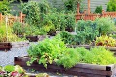 Κήπος λαχανικών και χορταριών Στοκ εικόνα με δικαίωμα ελεύθερης χρήσης