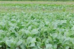Κήπος λαχανικών Στοκ φωτογραφία με δικαίωμα ελεύθερης χρήσης