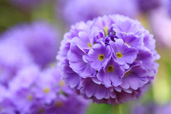 κήπος λουλουδιών άνθισης Στοκ Φωτογραφία