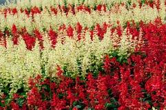 κήπος λουλουδιών ανασ&kap Στοκ φωτογραφίες με δικαίωμα ελεύθερης χρήσης
