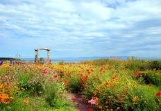 κήπος λουλουδιών θεαμ&a Στοκ Φωτογραφία