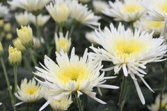 κήπος λουλουδιών με τα διάφορα άσπρα λουλούδια Στοκ φωτογραφία με δικαίωμα ελεύθερης χρήσης