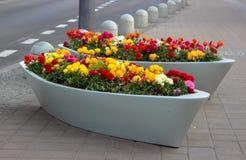 Κήπος λουλουδιών οδών στοκ εικόνα με δικαίωμα ελεύθερης χρήσης