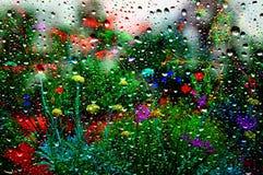 Κήπος λουλουδιών στη θερινή βροχή στοκ φωτογραφία
