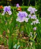 Κήπος λουλουδιών στο πάρκο πόλεων Στοκ φωτογραφία με δικαίωμα ελεύθερης χρήσης