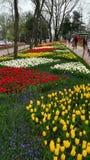 Κήπος λουλουδιών στο emirgyan πάρκο, Ιστανμπούλ, Τουρκία στοκ εικόνες με δικαίωμα ελεύθερης χρήσης