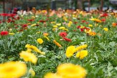 Κήπος λουλουδιών στοκ φωτογραφία
