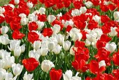 κήπος λουλουδιών Στοκ Εικόνες