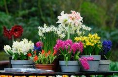 κήπος λουλουδιών Στοκ φωτογραφία με δικαίωμα ελεύθερης χρήσης