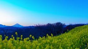 Κήπος λουλουδιών Canola χρονικού σφάλματος ηλιοβασιλέματος στο πάρκο Azumayama στην ευρεία βλασταημένη κλίση Shounan Kanagawa απόθεμα βίντεο