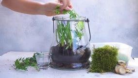 Κήπος μέσα στο βάζο κτιστών φιλμ μικρού μήκους