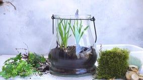 Κήπος μέσα στο βάζο κτιστών απόθεμα βίντεο