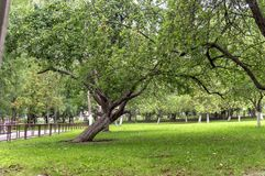 κήπος μήλων στα τέλη του καλοκαιριού με τα μήλα στους κλάδους δέντρων μηλιάς Στοκ εικόνα με δικαίωμα ελεύθερης χρήσης