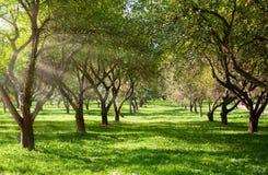 κήπος μήλων Στοκ φωτογραφίες με δικαίωμα ελεύθερης χρήσης