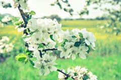 Κήπος μήλων Στοκ Φωτογραφίες