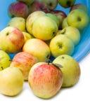 Κήπος μήλων που απομονώνεται Στοκ Φωτογραφίες