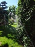Κήπος Μαΐου κατά τη διάρκεια της προσοχής και του ποτίσματος άνοιξη στοκ φωτογραφίες με δικαίωμα ελεύθερης χρήσης