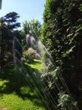 Κήπος Μαΐου κατά τη διάρκεια της προσοχής και του ποτίσματος άνοιξη στοκ εικόνες