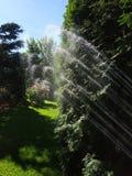 Κήπος Μαΐου κατά τη διάρκεια της προσοχής και του ποτίσματος άνοιξη στοκ εικόνα με δικαίωμα ελεύθερης χρήσης
