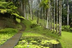 κήπος Μαρτινίκα βαλατών στοκ φωτογραφία με δικαίωμα ελεύθερης χρήσης