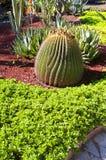 κήπος μεξικανός Στοκ Εικόνες