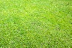 Κήπος με έναν πρόσφατα κομμένο χορτοτάπητα στοκ εικόνες με δικαίωμα ελεύθερης χρήσης